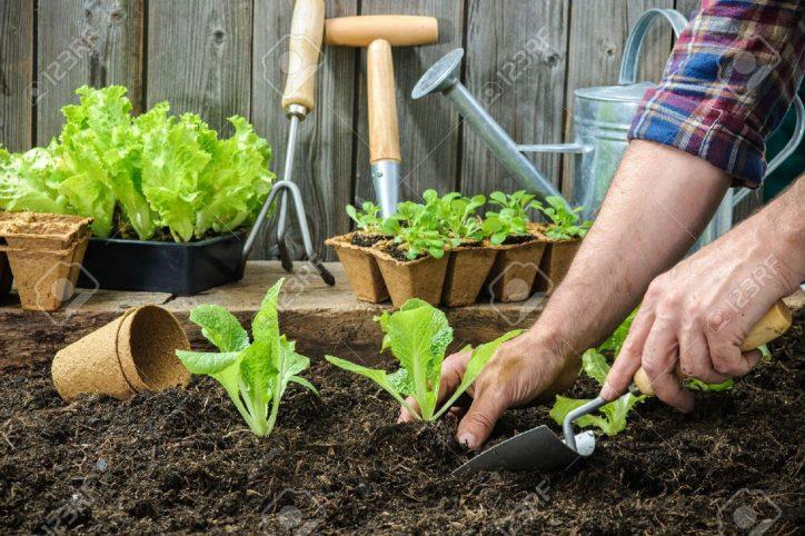 Ziemia dla roślin