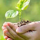 Uprawa i hodowla roślin